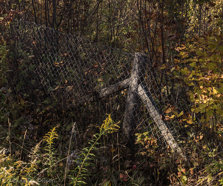 Scenic Fence, Halliburton Area, October 06 2011