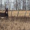 Donkey,December 11 2012, Amherst Island