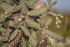 Cactus Wren, Tucson Arizona, March 15 2014, Canon 6D, 1/1250 F6.3 ISO160