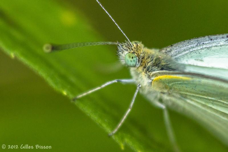 Butterfly, July 22 2012, Belleville