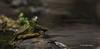 Turtle, Moira river, Sept 11 2013,#6998, Canon 6D-1/1000-F7.1-ISO320-LR5