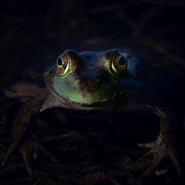 Frog, Frink Centre, Belleville, June 15, 2018, Canon 7D Mark II, 100-400mm, 1/640, F8.0, ISO 250