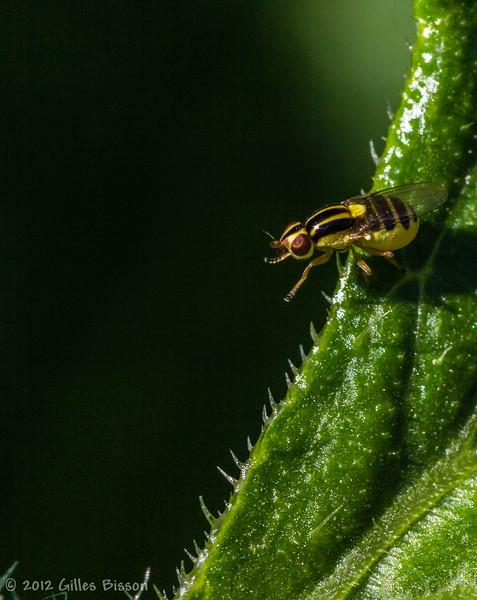Bug,July 07 2012, Belleville