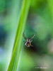 Backyard spider, July 28 2013, #3375, Canon 6D-100mm macro-1/250-F8.0-ISO 1600- LR5