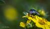 Backyard Critters, Aug 7 2013,#4283, Canon 6D-1/125-F10-ISO500-LR5