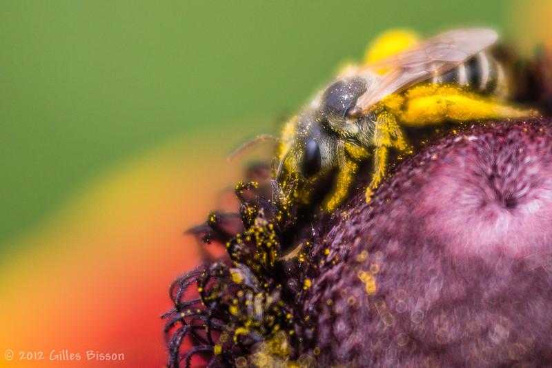 The Pollinator, July 15 2012
