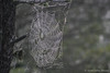 Spider Web, July 29 2008, Remi Lake nature trail