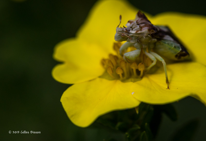 Bacyard Critters, Aug 7 2013,#4100, Canon 6D-1/1250-F6.3-ISO500-LR5