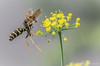Wasp, August 14 2012, Belleville