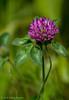 flower,June 05 2012, Presqui'ile Provincial Park