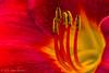 Flower close up, August 14 2012, Belleville