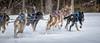 Marmora Sled Dog Races, January 31,2015, Marmora, Canon 7D mark2, 100-400 mm, 1/1000,F8.0,ISO 800