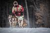 Marmora Sled Dog Races, January 31,2015, Marmora, Canon 7D mark2, 100-400 mm, 1/1250,F8.0,ISO 800