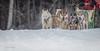 Marmora Sled Dog Races, January 31,2015, Marmora, Canon 7D mark2, 100-400 mm, 1/1250,F8.0,ISO640