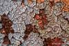 Junkyard finds, November 10 2012, Prince Edward County