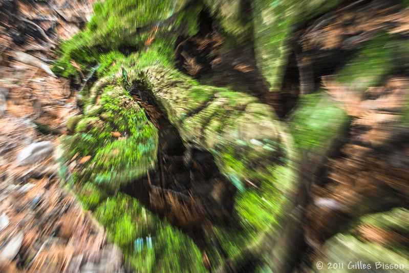 Stump, taken with my telephoto zooming out at a slow shutter speed, April 8 2011