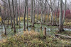 Prince Edward Point swamp, November 18  2011