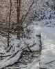 winter Scene, Jan 12 2012, Frink Centre Conservation Area trails