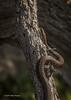 Water snake, Bay of Quinte, May 2013