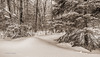 Snowscape, Monochrome,Algonquin Park,East Beach area, March 07 2015, Canon 6D, 1/100,F9.0,ISO125