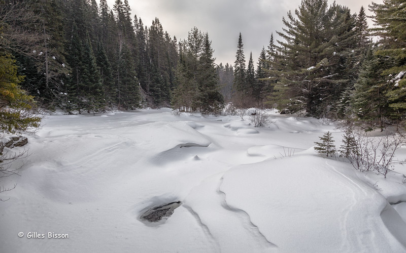 Snowscape, Algonquin Park,Madawaska River, March 07 2015, Canon 6D, 1/100,F8.0,ISO250