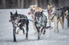 Marmora Dog sled Races, January 31,2015, Marmora, Canon 7D mark2, 100-400 mm, 1/1250,F8.0,ISO640