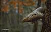 Mushroom, Vanderwater Conservation Area, November 14, 2015, Canon 6D, 24-105mm, 1/80sec, F8.0 ISO 800