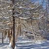 Snowscape,Presqu'ile Provincial Park, February 18 2016, Canon 6D, 1/100,F11, ISO 100