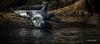 Grey Seals, Bonadventure Island, Gulf of St-Lawrence, September 5, 2016,1/2500, F7.1, ISO 640