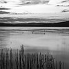 Sunrise (B&W) over Lake of two rivers, Algonquin Park, September 27,2017, Canon 6D, 45mm, 2.0 sec, F18, ISO 50