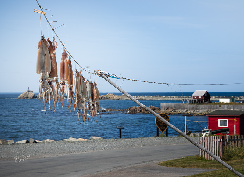 Drying Squid, Bonavista, Newfoundland, August 25, 2019, Canon EOS R, !/100, F10, ISO 50