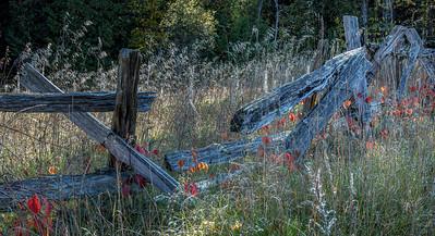Vanderwater trail, October 11, 2019, Canon EOS R, 1/6 sec, F16, ISO 50