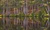 Pog Lake, Algonquin Park, September 26 2014, Canon 6D, 1/640,F9.0,ISO1000