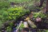 Landscape, Beaver Pond Trail, Algonquin Park, June 04, 2015, Canon 6D, 24-105mm, 6.0sec, F18, ISO 50