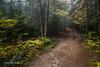 Mew Lake Trail, Algonquin Park, Sept 28 2013,#8556, Canon 6D-2.0sec -F16-ISO50-LR5