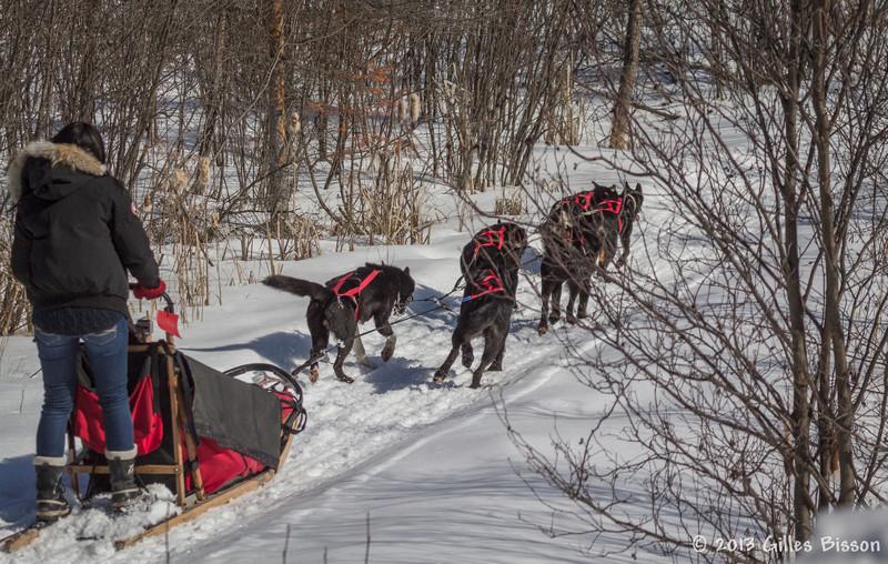 Dog Sled, March 09 2013, Algonquin Park