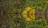 Pog Lake, Algonquin Park, September 26 2014, Canon 6D, 1/1000,F8.0,ISO200