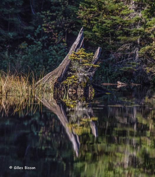 Pog Lake, Algonquin Park, September 26 2014, Canon 6D, 1/1250,F7.1,ISO320