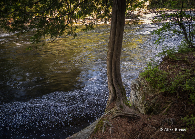 Tea Lake Dam rapids,Algonquin Park, June 03 2015, Canon 6D, 24-105mm, 1/4, F5.6, ISO 50