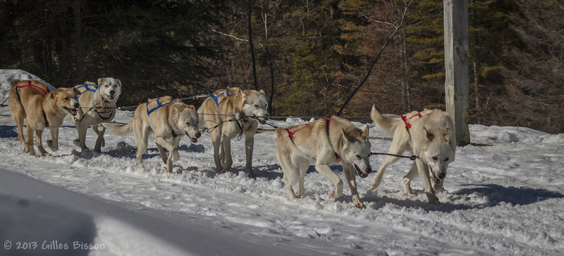 Dog Sled, March 09 2013, Algonquin Park