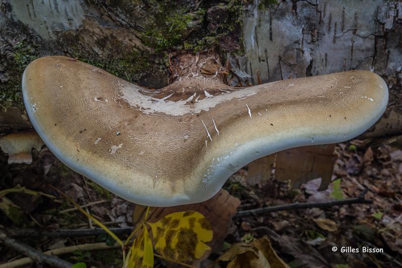 Mushroom, Algonquin Park, Sept 26 2015, Canon 6D, 24-105mm, 20 sec, F22, ISO 50