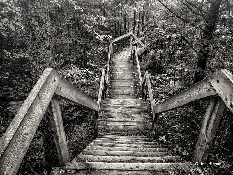 Algonquin Park Stairs, Beaver Pond Trail, Algonquin Park, September 25, 2014, Canon 6D 24-105mm, 13.0 sec, F20, ISO 50
