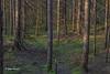Algonquin Park landscape, June 02,2015, Canon 6D, 24-105mm, 2sec, F18, ISO 50