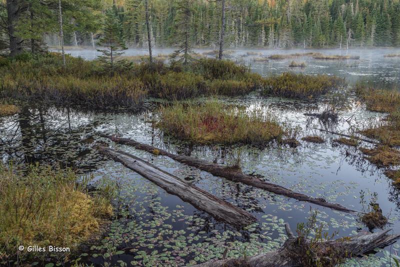 Early morning landscape, Algonquin Park, Sept 26 2015, Canon 6D, 24-105mm, 3.2 sec, F14, ISO 50
