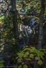 Scenic Falls, Hiawatha Highlands Conservation Area,Sault Ste Marie, October 06 2011