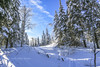 Kapuskasing snowshoe trail, Jan 31 2008