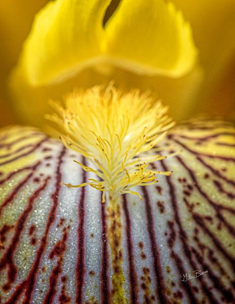 Flower from Quinte Botanical Gardens, June 09, 2019, Canon 7D Mark II, 100mm macro, 1/250, F11, ISO 500