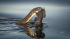 Northern Watersnake fishing, June 20, 2021, Bay of Quinte, Sony A7RIV, 100-400mm, 1.4X, 1/1250, F8.0, ISO 640