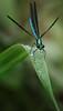 Backyard critter, Aug 10, 2020, Sony AR7IV, 100-400mm, 1/1000, F13, ISO 2000