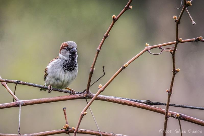 Bird, May 04 2011, Belleville
